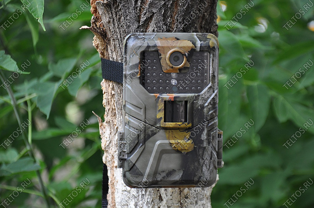 Филин JET на дереве