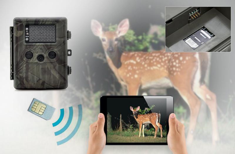 Лесная камера слежения